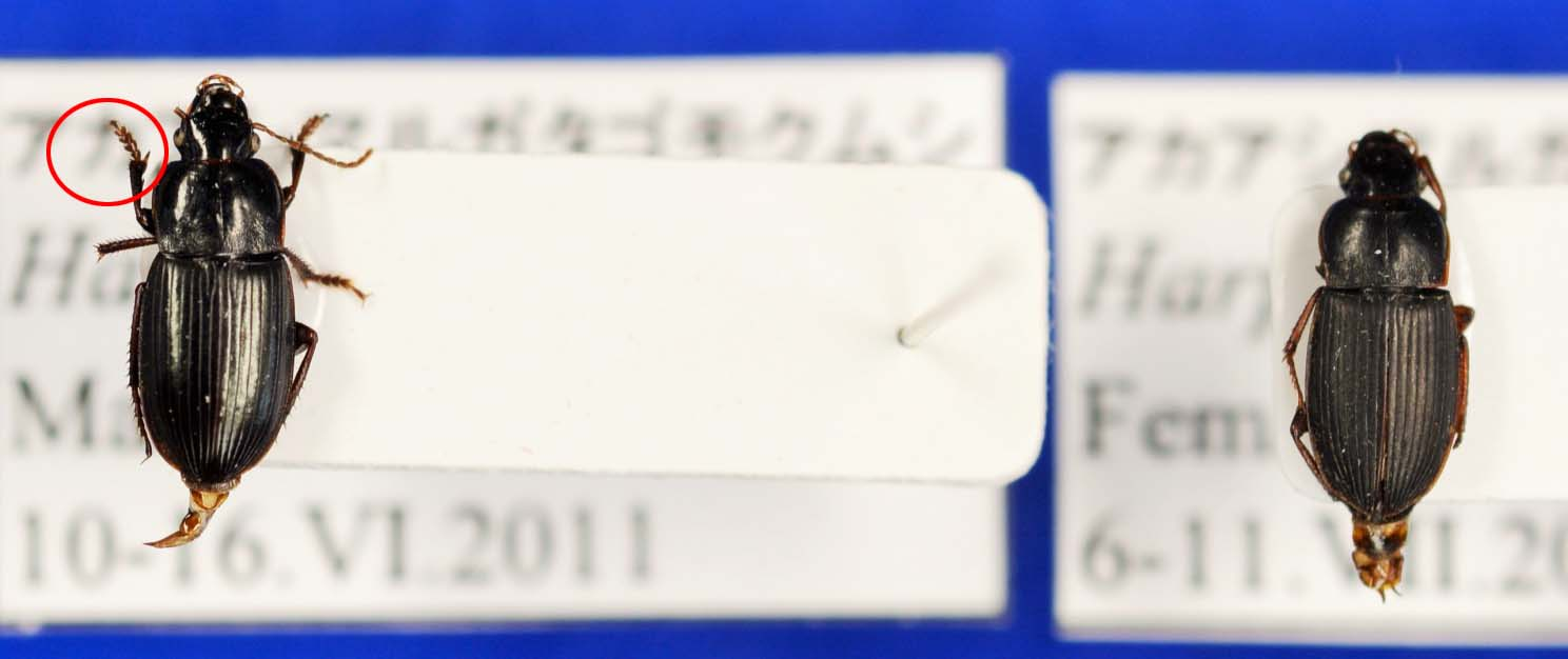 image40-1